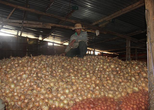 Nông sản rớt giá thê thảm nhiều nông hộ phải trữ vào kho chờ giá lên mới bán