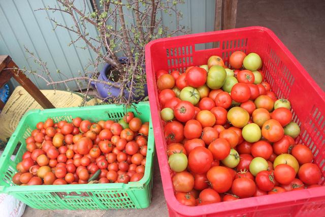 Mặt hàng cà chua chỉ tăng giá nhẹ
