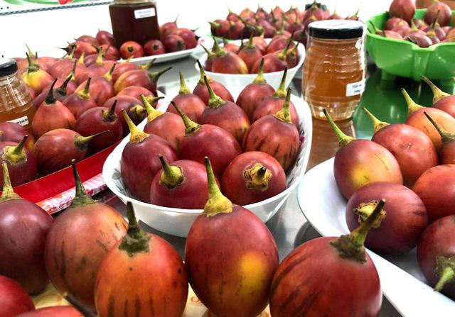 Dù không đắt như cà chua nhập khẩu, nhưng đây là loại cà chua trồng ở Việt Nam có giá đắt đỏ nhất hiện nay. Bởi, so với giá cà chua đỏ bán ngoài chợ thì cà chua thân gỗ đắt gấp 15-20 lần, còn so với giá cà chua đen, cà chua socola,... thì cà chua này đắt gấp khoảng 4 lần.