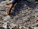 Bộ Công Thương thông tin về sự việc vây cá mập phơi tại trụ sở Thương vụ Chile
