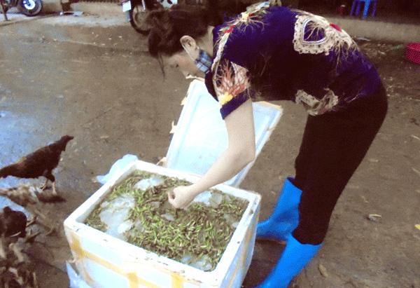 Làng nghề rang tẩm châu chấu độc nhất Việt Nam
